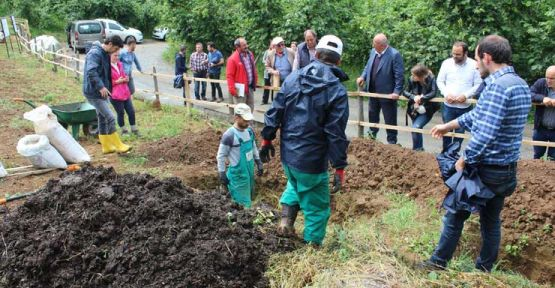 Photo of Fındıkta bitkisel komposta gübre dönemi