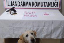 Photo of ÜZERİNDE VE EVİNDE EKSTAZİ BULUNDU